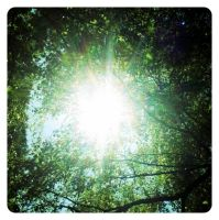 Sunlight through trees by Thomnommonster