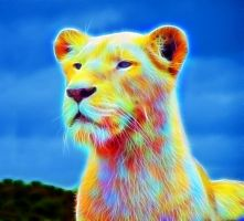 Lioness in the Sun by megaossa