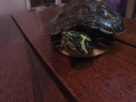 turt by Toothlesslover123