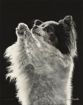 Jazzy - Scratchboard by ShaleseSands