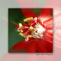 Red Passion by kaiack