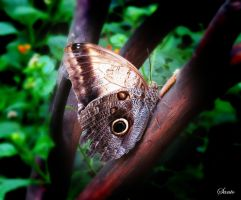 Butterfly by santogc
