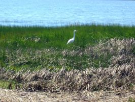 No Egrets by unessential