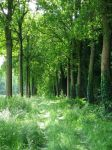 Forest path by Wimmeke63