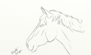 Quick Sketch: Horse by Isotoperuption