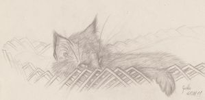 My cat by FunnySanguevivo