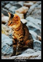 Cat of Rhodes by Yunalescie