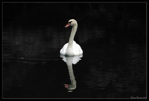 Swan Shadow by GeodeLady