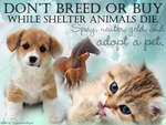 Animal Adoption banner by The-Cynical-Unicorn