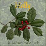 Holly PSD by mirrorimagestock