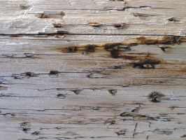 Old Train Wood by avicados