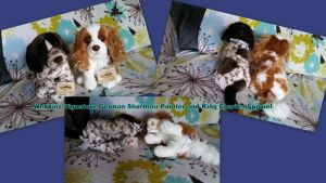 webkinz signature Pointer and King Charles Spaniel by Vesperwolfy87