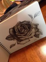 Hyper Realistic Black And Grey Rose by Shubi1216