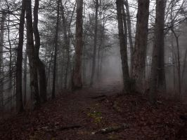 Woods of mystery by GriffinPhillis