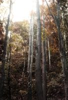 Man made Forest of Bohol by boisei7