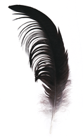 Red-crowned crane feather by TichodromaMuraria