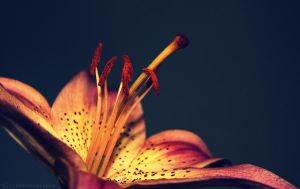 Lilly 4 by ElinsPhotography