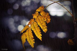 L'automne a mourir I by hyneige