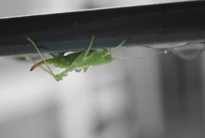 grasshopper by madko