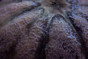 Cantaloupe Abstracted by KalkmanPhotography