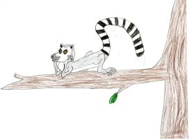 Arlene the Ring-Tailed Lemur by Wesdaaman