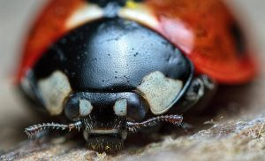 Say cheese Miss Lady bug by Robert-Eede