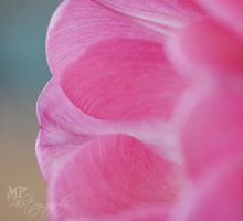 -197- Pretty in Pink III by MiriamPeuser