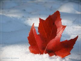 I.AM.CANADIAN. by Bleezer