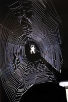 Spider web by oldsoulmasquer