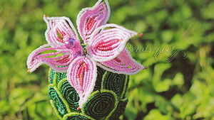 Cactus with pink flower (close-up) by beads-poet
