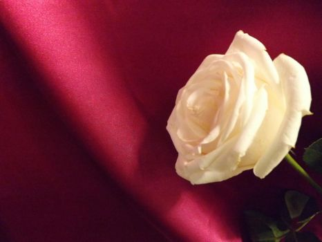Satin and Rose by Prussia-Hungary