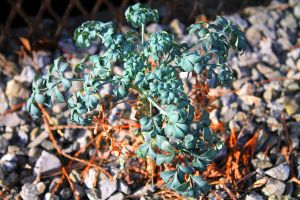Unknown plant by PythonIt