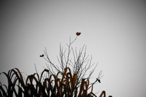 Autumn Leaf by escapeartist101