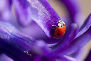 ladybird by Utopiste