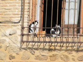Cats in Toledo by eillahwolf