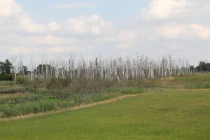 Landscape 2010 by Camille-2406