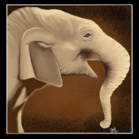 May 2012---Asian Elephant by amydrewthat
