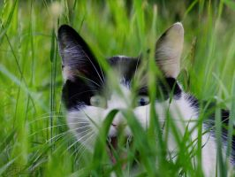 lurker cat by efeline
