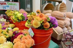 October 2014, Local Farm Stand Autumn Flowers by Miss-Tbones