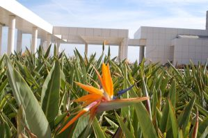 getty, birds of paradise by theFATpirate
