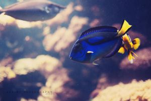 dorie found by nari-me