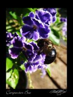 Carpenter Bee by DistantVisions