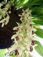 .stock: basketfull of orchids. by guavon-stock