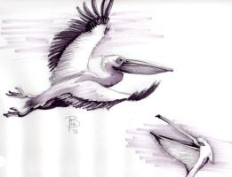Day2: Pelican by Shestval
