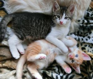 My little orphan kittens Thor and Loki by Catskind