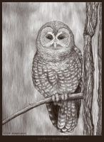 Northern Spotted Owl -tablet by LisaCrowBurke