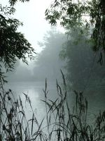 Foggy Pond 8 by pelleron-stock