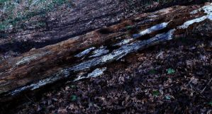Log by The-Underwriter
