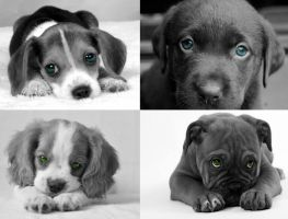 Puppies Portraits by Thelema001