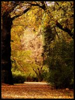 The Polish golden autumn by alone-maggie